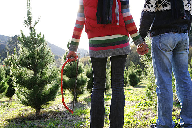 Rear view of young couple at Christmas tree lot.