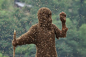 'Bee Bearding' Contest In Hunan