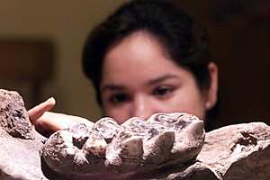 SALVADORAN PALEONTOLOGISTS UNCOVER DEPOSITE OF PRE-HISTORIC BONES